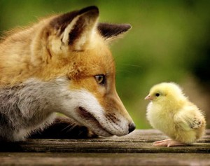 fox_and_chick